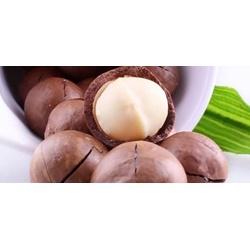 Hạt Macadamia nguyên hạt của Úc ,  gói 500g | Các loại rau, quả, củ