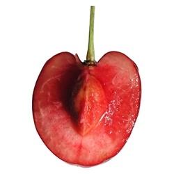 Trái Cherry tươi